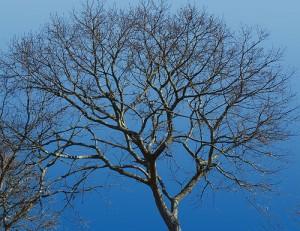 Winter Tree on Cape Cod